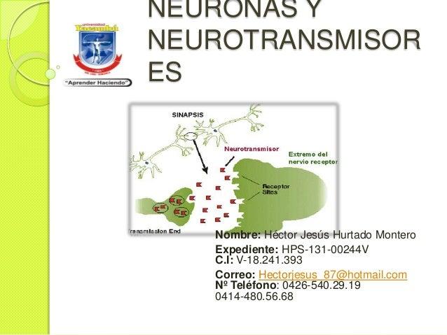 NEURONAS Y NEUROTRANSMISOR ES  Nombre: Héctor Jesús Hurtado Montero Expediente: HPS-131-00244V C.I: V-18.241.393 Correo: H...
