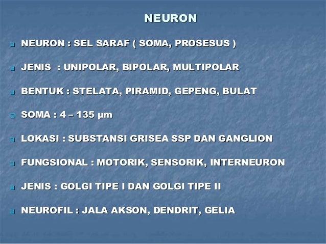 NEURON  NEURON : SEL SARAF ( SOMA, PROSESUS )  JENIS : UNIPOLAR, BIPOLAR, MULTIPOLAR  BENTUK : STELATA, PIRAMID, GEPENG...