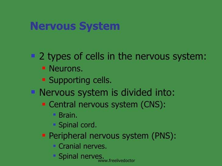 Nervous System <ul><li>2 types of cells in the nervous system: </li></ul><ul><ul><li>Neurons. </li></ul></ul><ul><ul><li>S...