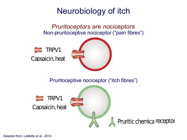 Neuropathic Itch Caused by Lupus - Health Guide Info