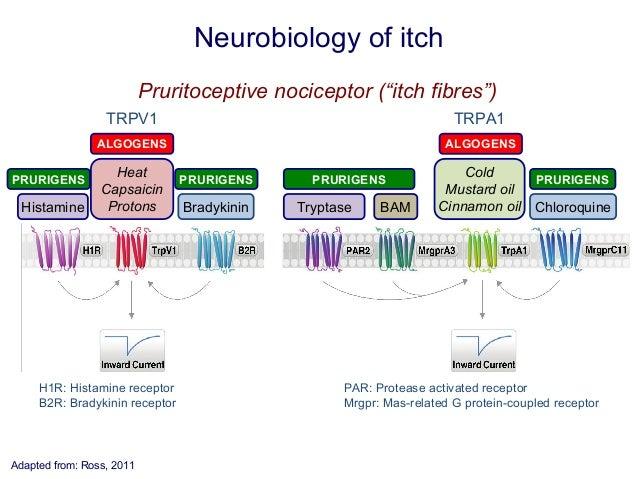 Itch - Wikipedia