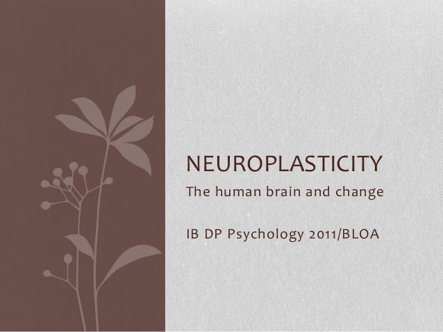 The human brain and change IB DP Psychology 2011/BLOA NEUROPLASTICITY