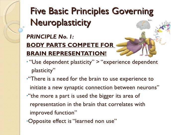 experience dependent plasticity