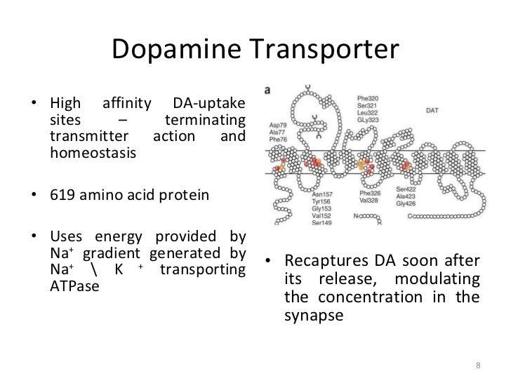 [Image: neurotransmitter-dopamine-8-728.jpg?cb=1306406048]