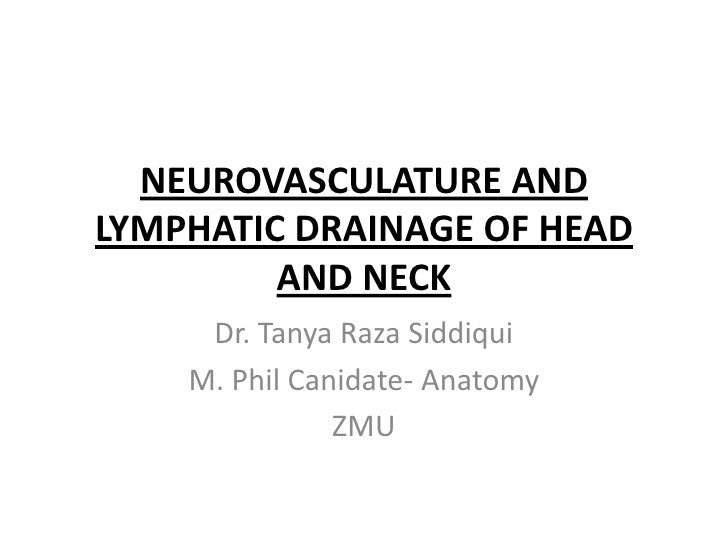 NEUROVASCULATURE ANDLYMPHATIC DRAINAGE OF HEAD         AND NECK     Dr. Tanya Raza Siddiqui    M. Phil Canidate- Anatomy  ...