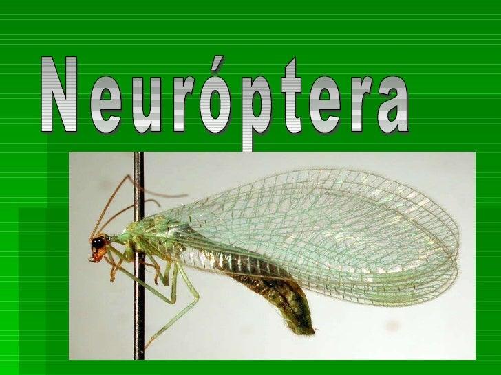 Neuróptera