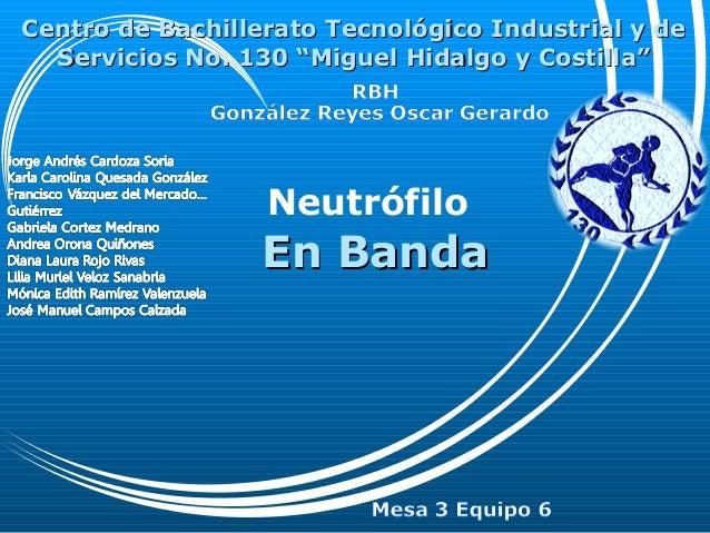 NeutrófiloEn BandaEn BandaCentro de Bachillerato Tecnológico Industrial y deCentro de Bachillerato Tecnológico Industrial ...