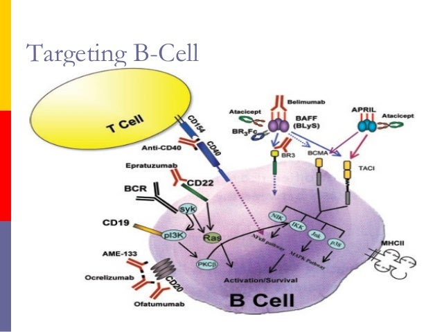 mechanism of action of immunosuppressive drugs pdf