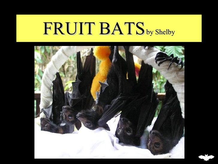 FRUIT BATS  by Shelby