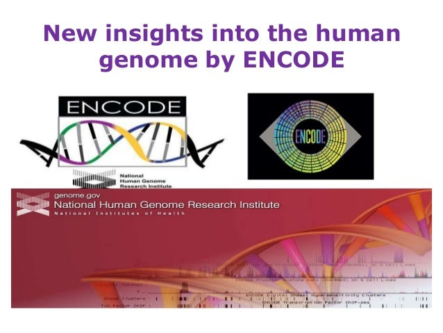 New insights into the human genome by encode 14.12.12