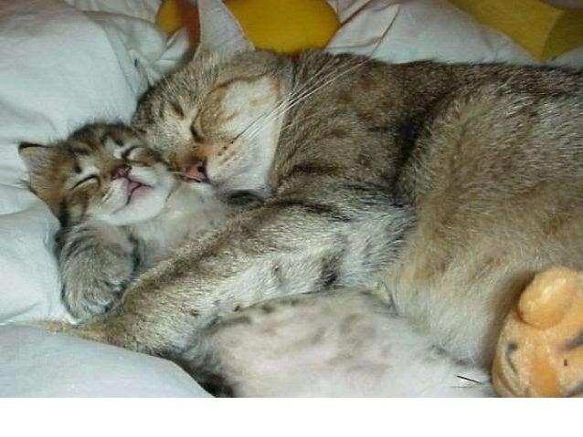 sleep-our-health-40-638.jpg?cb=141914913
