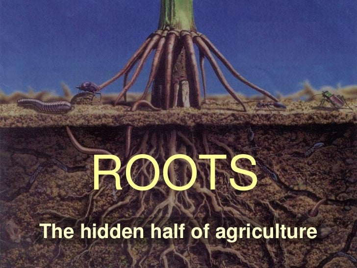 ROOTSThe hidden half of agriculture