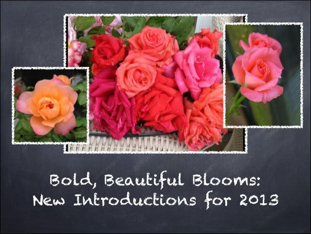 Bold, Beautiful Blooms:New Introductions for 2013