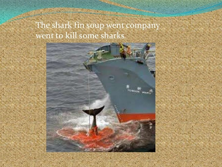 The shark fin soup went companywent to kill some sharks.