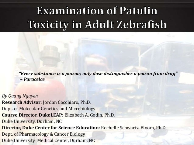 Examining Neurobehavioral Toxicity of Patulin in Adult Zebrafish