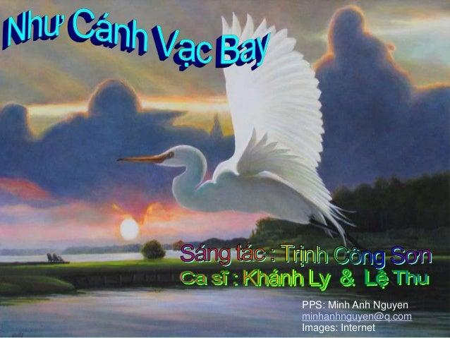 Nhu canh vac bay