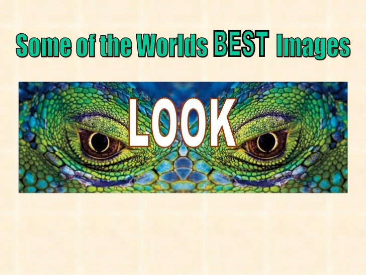LOOK Some of the Worlds  Images BEST