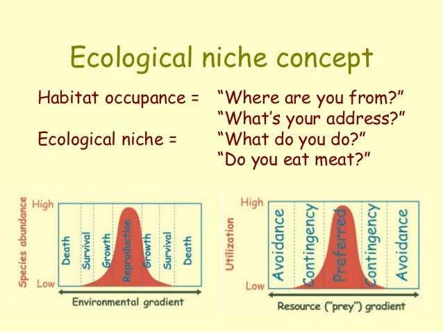 the importance of the concept of the ecological niche Glossary we are committed to bringing a greater understanding of ecology, and its importance, to a wider audience  ecological niche.