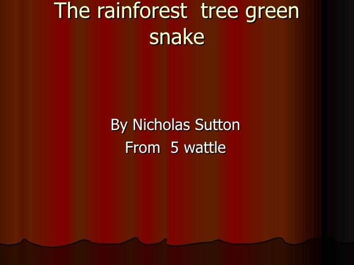 The rainforest  tree green snake   By Nicholas Sutton From  5 wattle