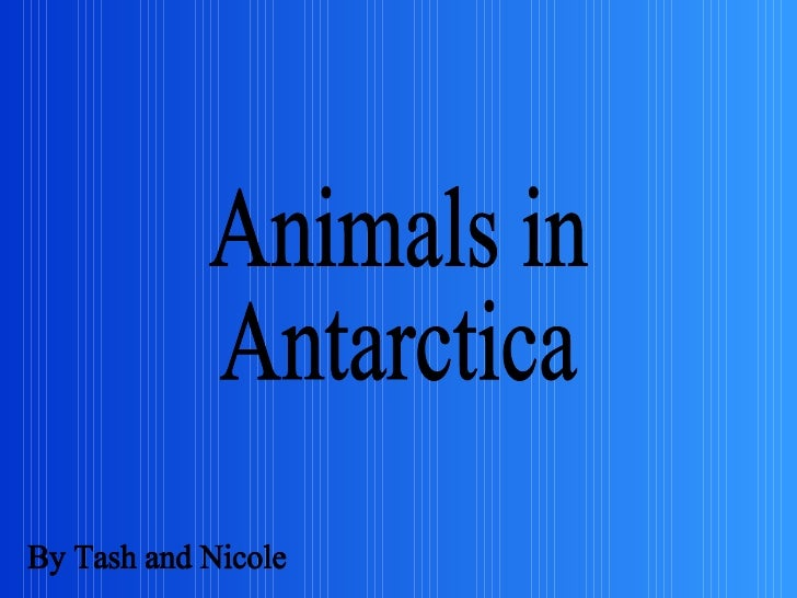 Animals in  Antarctica By Tash and Nicole