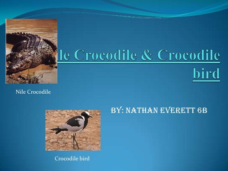 Nile Crocodile  & Crocodile Bird-Symbiotic Relationship