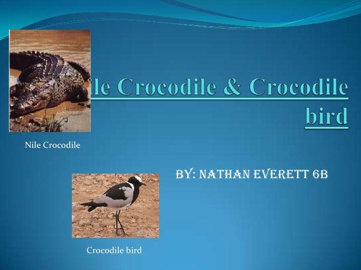 Nile Crocodile & Crocodile bird<br />by: Nathan Everett 6B <br />Nile Crocodile<br />Crocodile bird<br />