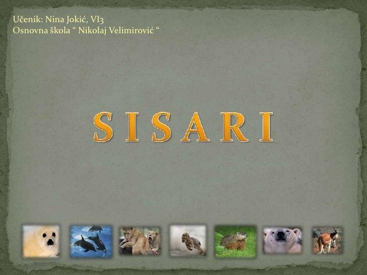 SISARI - odlike, VI razred
