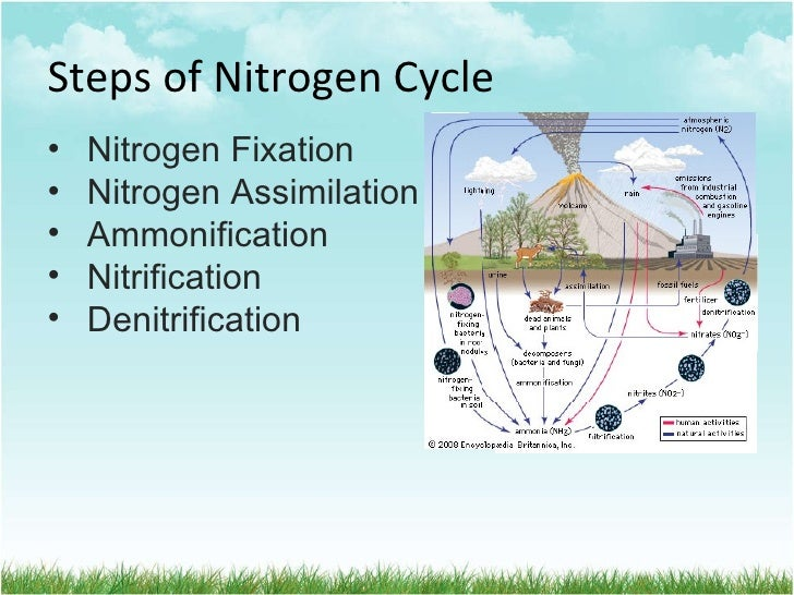 Wansley amber science hydrology httpimageidesharecdnnitrogencycle 100908070037 phpapp0195 nitrogen cycle 5 728gcb1283929815 ccuart