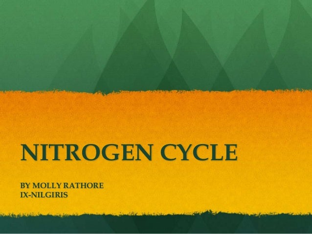 NITROGEN CYCLE BY MOLLY RATHORE IX-NILGIRIS