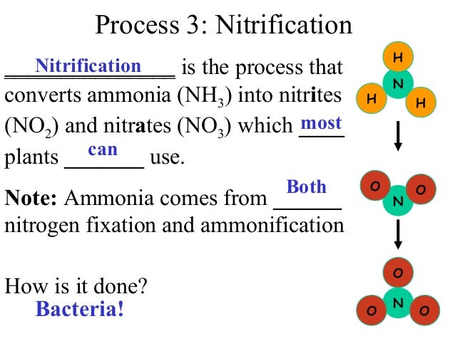 nitrogen ammonification