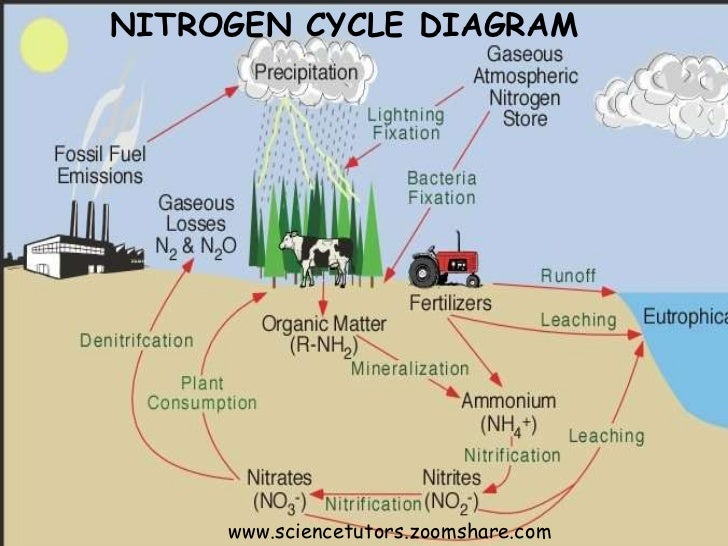 Nitrogen Cycle And Fixation