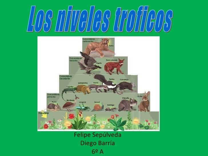 Felipe Sepúlveda Diego Barría 6º A Los niveles troficos