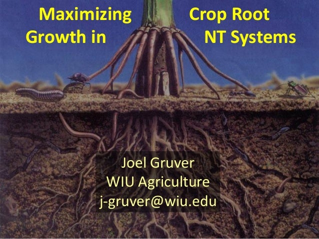 Maximizing Growth in  Crop Root NT Systems  Joel Gruver WIU Agriculture j-gruver@wiu.edu