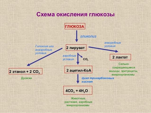 4Н2О гликолиз Гипоксия или