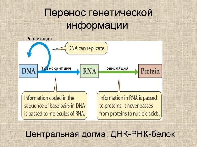 Перенос генетической
