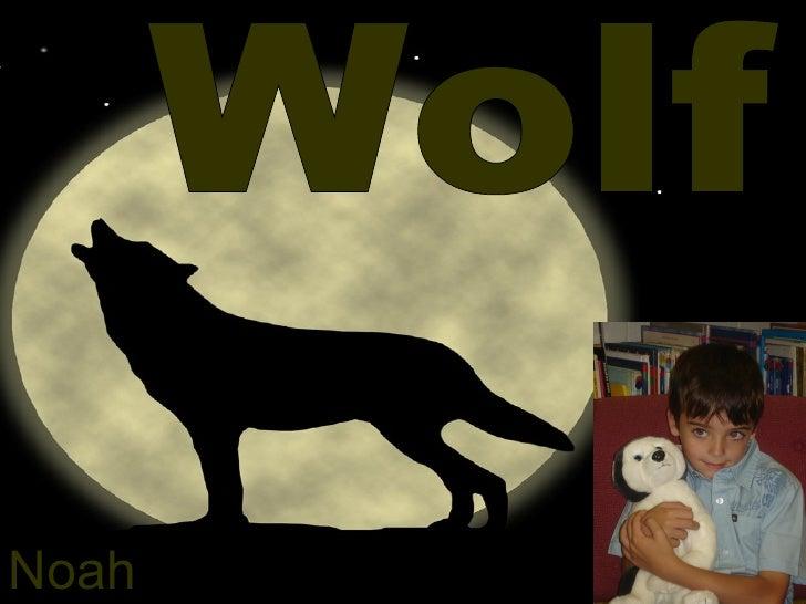 Wolf Noah