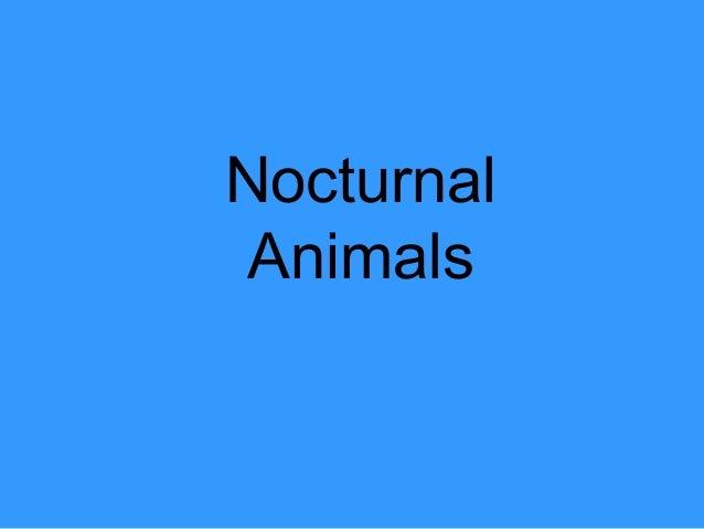 Nocturnal animals blog
