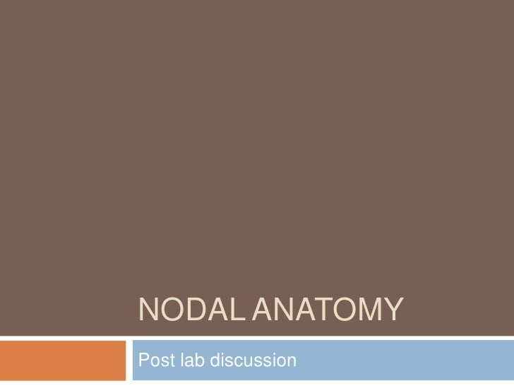 NODAL ANATOMY<br />Post lab discussion<br />