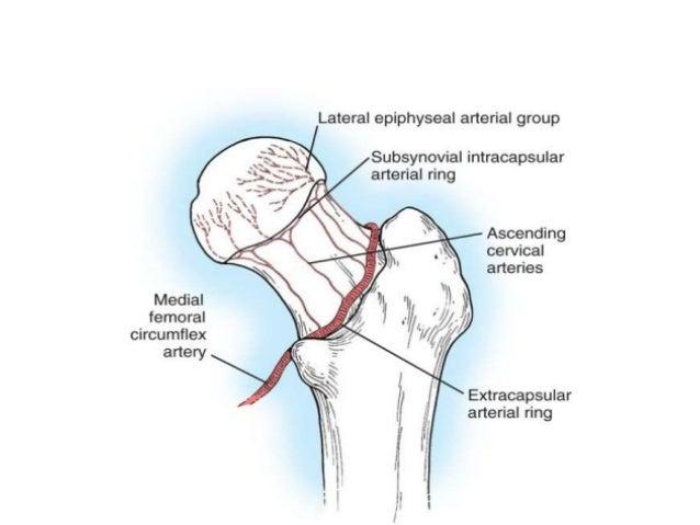 Nof anatomy