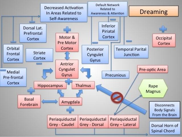 Neurobiologcal  Model of Non lucid dreaming