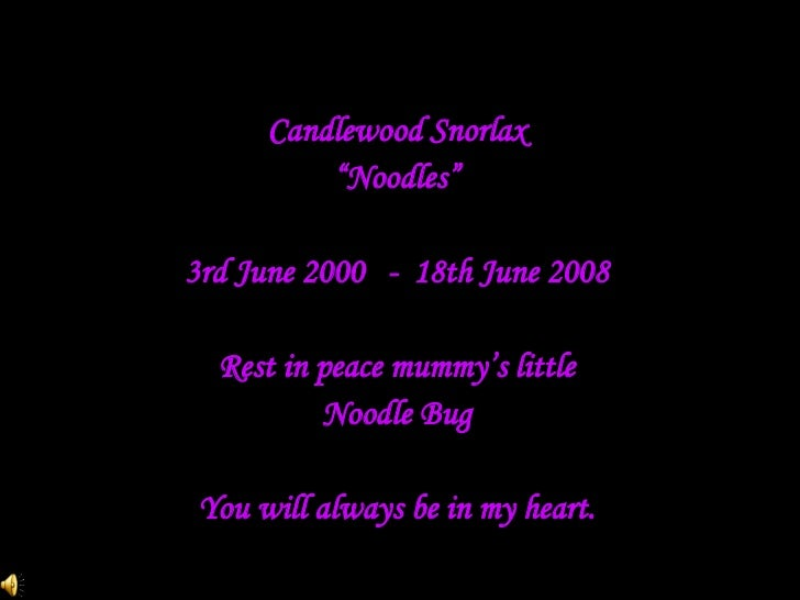 "Candlewood Snorlax "" Noodles"" 3rd June 2000  -  18th June 2008 Rest in peace mummy's little Noodle Bug You will always be ..."