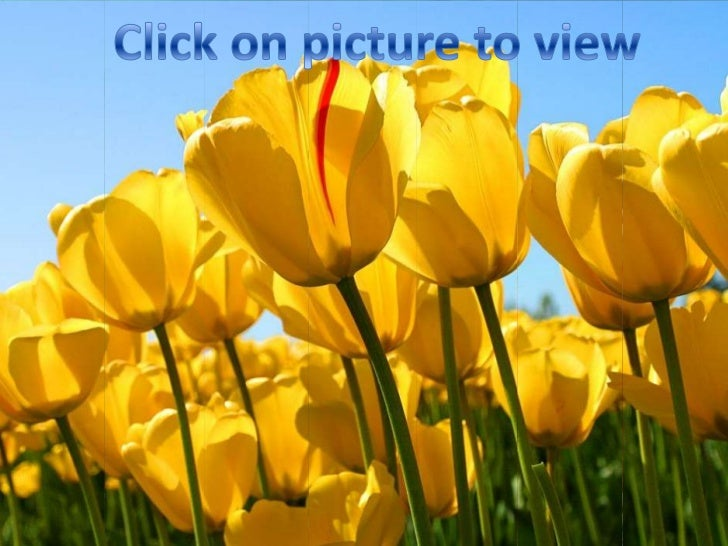 Click on picture to view<br />No One's Flowers<br />