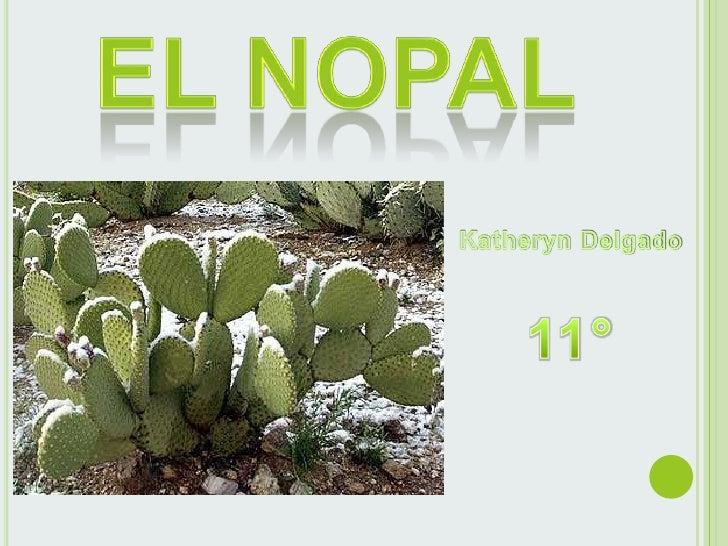 El nopal es una planta silvestre quesobrevive en regiones desérticas yfrías. No requiere de mucha aguapara su cultivo, por...