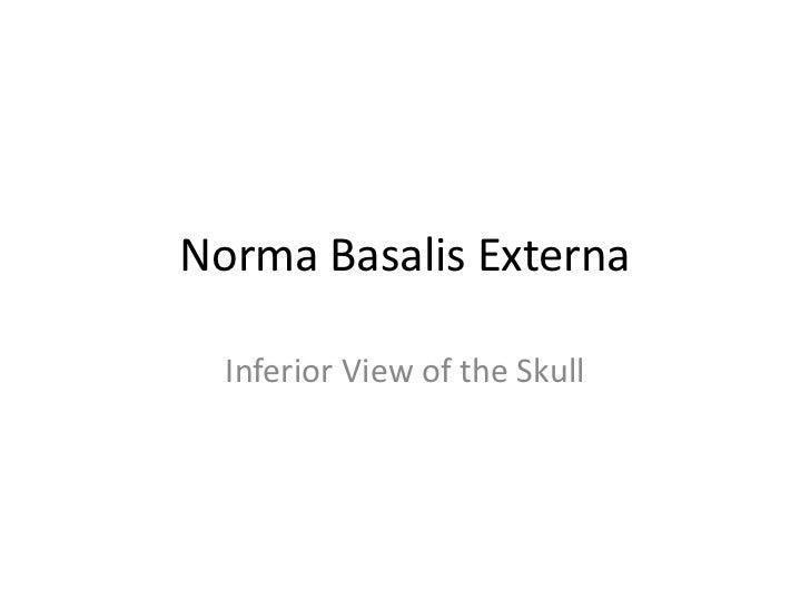 Norma Basalis Externa  Inferior View of the Skull