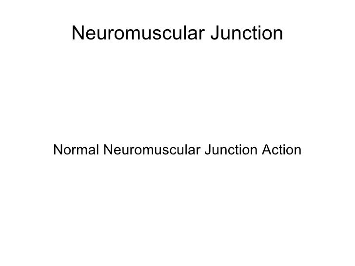 Neuromuscular Junction Normal Neuromuscular Junction Action
