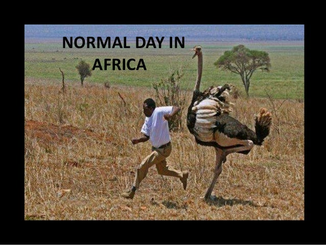 Normal day in africa