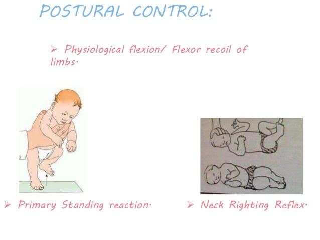 Body Righting Reflex Neck Righting Reflex