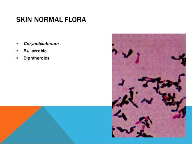 MICROBES AND YOU: NORMAL FLORA