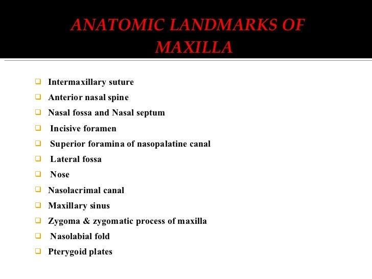 Nasal Septum Radiograph Fossa And Nasal Septum