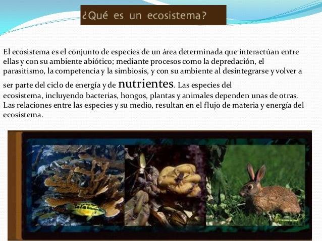 El ecosistema es el conjunto de especies de un área determinada que interactúan entreellas y con su ambiente abiótico; med...